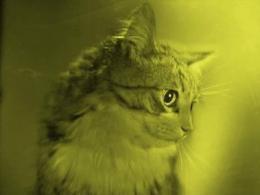 """В ростовском музее краеведения открылась частная """"Голографическая выставка живых картин"""""""