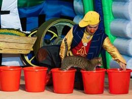 Cats-шоу