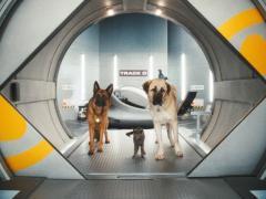 Кошки против собак: месть Китти Галор 3D