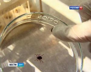 На Дону зафиксировано 14 случаев заболевания крымской геморрагической лихорадкой