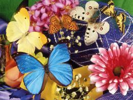 """Выставка """"Эффект бабочки"""""""