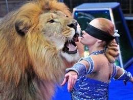 В созвездии Льва