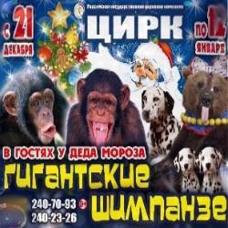 Гигантские Шимпанзе в гостях у Деда Мороза
