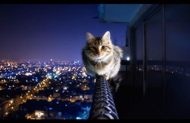 Если мужчина Кот...