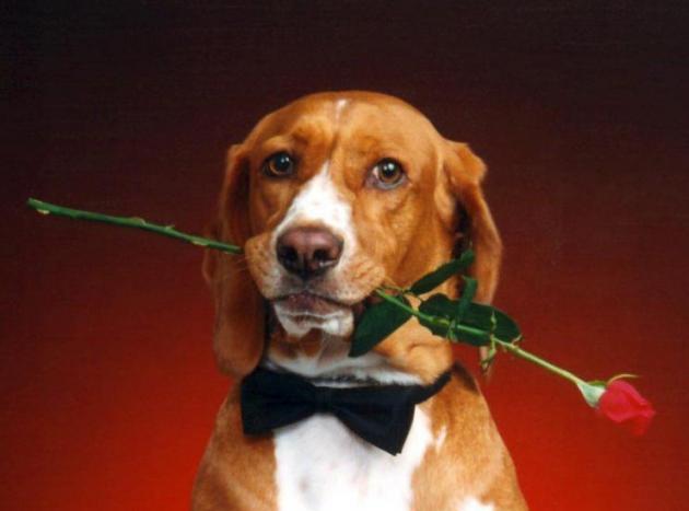 Если мужчина Собака...