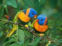 Выставка попугаев и экзотических птиц