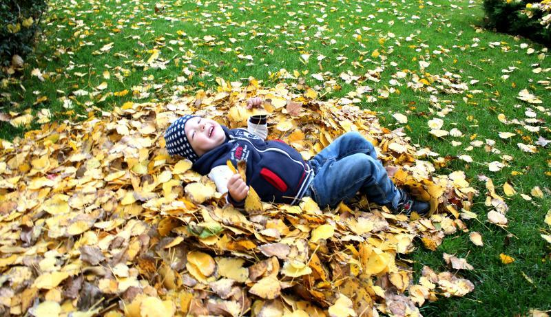Осенние листочки для моего сыночка Андрея!