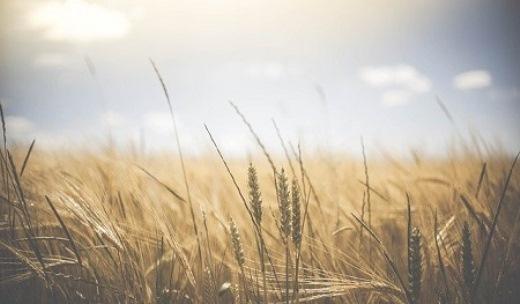 На Кузбассе начнут производить оборудование для зерносушильных комплексов